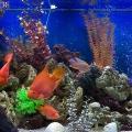 Фотосъемка аквариума.
