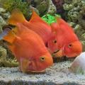 Фотосъемка рыб в аквариуме